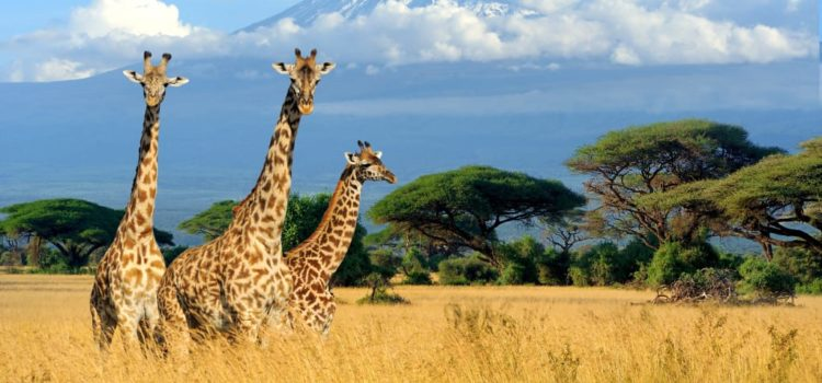 Top Backpacking Destinations in Kenya
